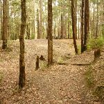 Approaching the Pines Picnic Area in the Watagans (322379)