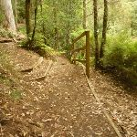 Intersection with timber steps close to Boarding House Dam in the Watagans (322523)