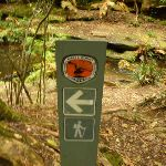 Timber track marker near the Moss Wall in the Watagans (322670)
