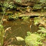 Pool of water near the Moss Wall in the Watagans (322703)