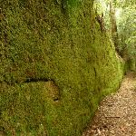 Moss Wall near the Boarding House Dam in the Watagans (322736)