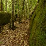 Moss Wall near the Boarding House Dam in the Watagans (322742)