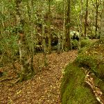 Moist forest near the Moss Wall in the Watagans (322748)