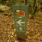 Timber track marker near the moss wall in the Watagans (322754)