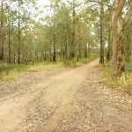 Management trail near Monkey Face viewpoint in the Watagans (322871)