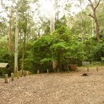 Gap Creek picnic area at the end of Bangalow Road in the Watagans (323186)