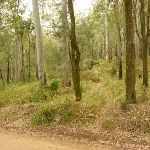 Track near Bangalow campsite on the Watagans (323249)