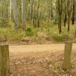 Timber post and track across Bangalow Road in the Watagans (323255)