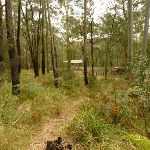 Track looking towards Bangalow campsite in the Watagans (323276)