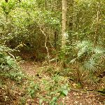Dense forest on the track to Gap Creek Falls in the Watagans (323675)