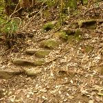 Stone steps on the track to Gap Creek Falls in the Watagans (323693)