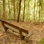 Timber seat on the track to Gap Creek Falls in the Watagans (323702)