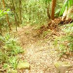 Forested track near the Gap Creek Falls in the Watagans (323753)