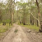 Narrow management trail on the green track near Mt Sugarloaf (324605)