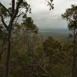 Forest and views behind near Mt Sugarloaf (324806)