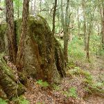 Rock formation in Turpentine forest (325457)