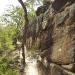 Long rock wall west of Hornsby Heights (328166)
