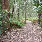 Open forest at Northern Berowra Creek campsite (329519)