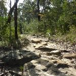 Rocky track South of Berowra Heights (332063)