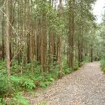 Turpentine Forest (332885)