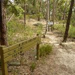 Int of the Great North Walk and the Blue Gum Walk (SW) (333275)