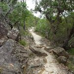 Rocky track north of Elouera lookout (334034)