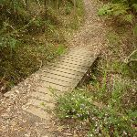 Small Flat timber Bridge north of the Jungo (334319)