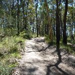 Back on the Great North Walk Track (336679)