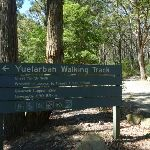 Welcome to Yuelarbah Walking Track (338353)