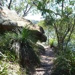 GNW beside the Lane Cove River (344362)