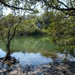 Lane Cove River from mangrove side trip (344566)