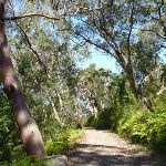 Walking through forest west of Berowra (352079)