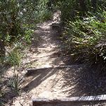 Providential Point Track (35291)