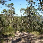 Following Awaba State Forest (358343)