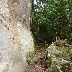 Walking along the base of the cliff on the Great North Walk (360167)