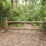Plesent timber gate on the narrowing trail (360239)