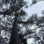 Looking Up (360521)