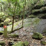 GNW arrow post in a mossy valley (360536)