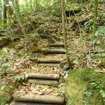 Timber steps north of Wollombi Brook Pool (364655)