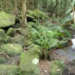 Plant life on the banks of Wollombi Brook Pool (364664)