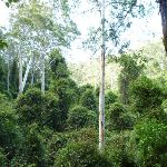 Into the canopy west of Wollombi Brook (364874)