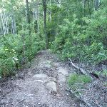 Rocky tracks and fallen branches east of Wollombi Brook (365162)