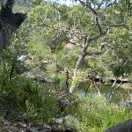 views of Heathcote Creek from the track (36780)
