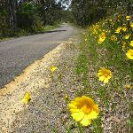 Forest Road in Bloom (367964)