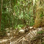 Dense forest north of Ourimbah Creek (368806)
