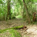 Mossy and cool environement on the north side of Palm Grove NR (369766)