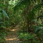 Walking through Palm Grove Nature Reserve (370150)