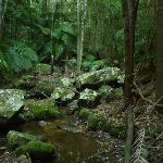 Crossing a small creek in Palm Grove Nature Reserve (370225)