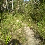 The bushtrack between the Talooma Servicetrails (37158)