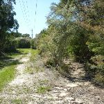 Folowing the powerlines on Keighley Ave Trail (371686)